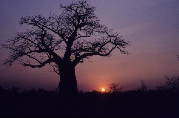 В Зимбабве ринулись туристы за местной сильнейшей виагрой