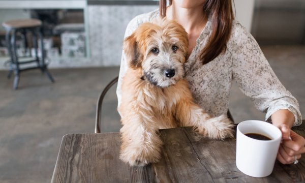 Жители Нью-Йорка смогут выпить кофе в компании своих собак