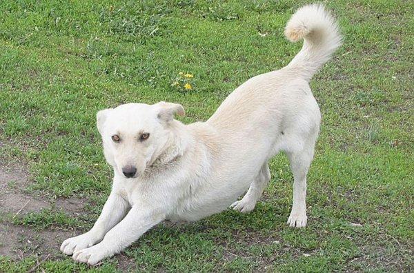 Жители Приморья освободили примерзшую языком к люку собаку