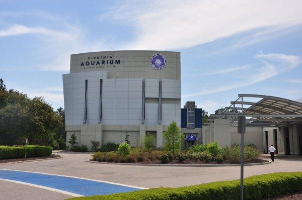 Рождение осьминога в Вирджинии набрало более 1,6 млн просмотров