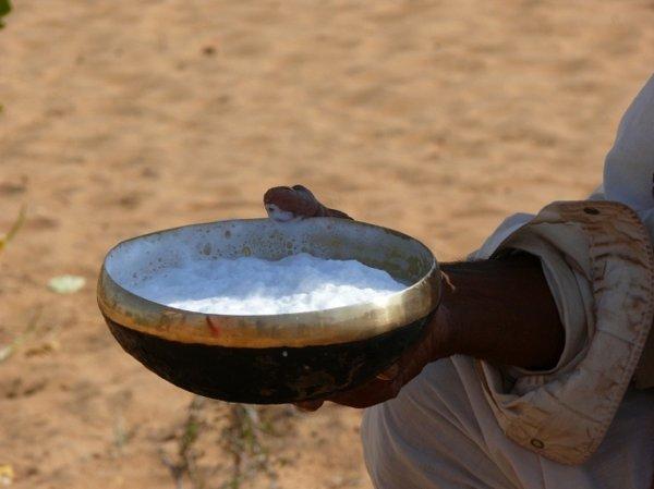 В Дубае создали детское питание на основе верблюжьего молока