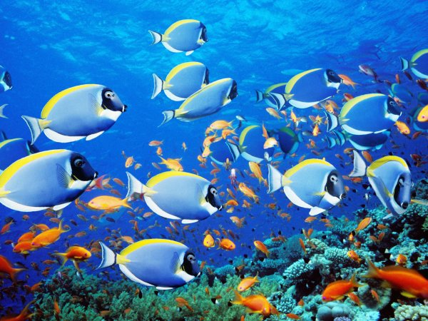 Президент Чили перед уходом с поста позаботилась о защите жизни в океане