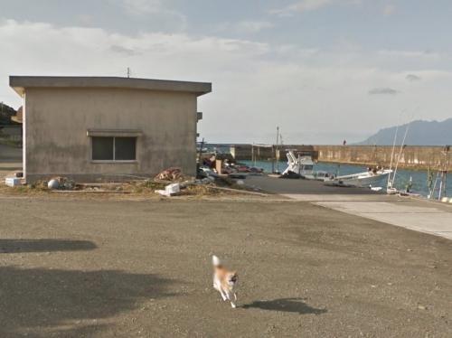 Смешная японская собака прославилась, «испортив» фото в Google Картах