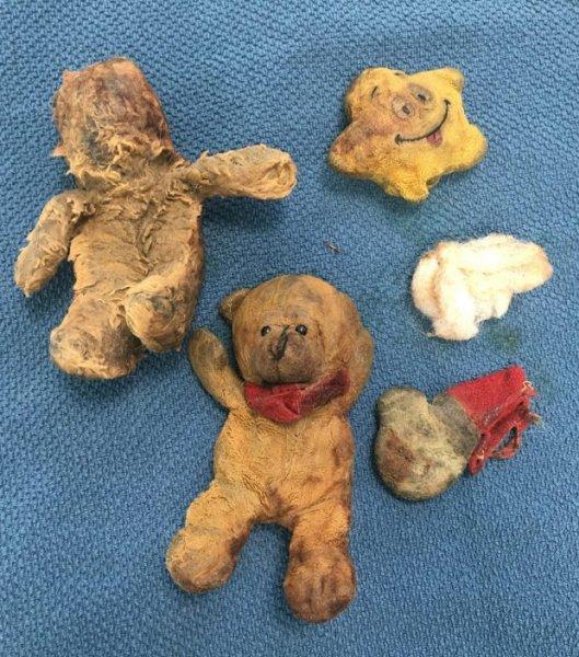 Врачи нашли в желудке собаки 4 плюшевых медведя