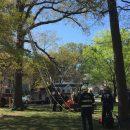 Английским пожарным пришлось помогать застрявшему на дереве мужчине, который спасал кота