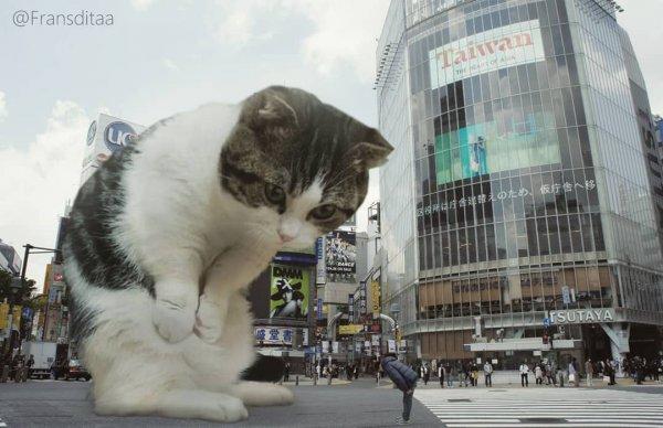 Художник из Индонезии вставляет огромных котов в местные пейзажи
