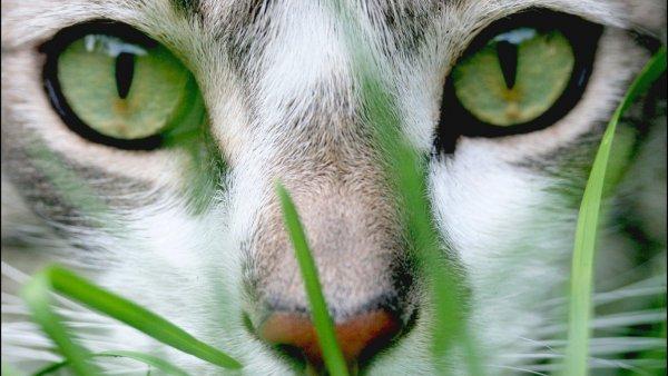 Интернет покорила «самая вежливая кошка»