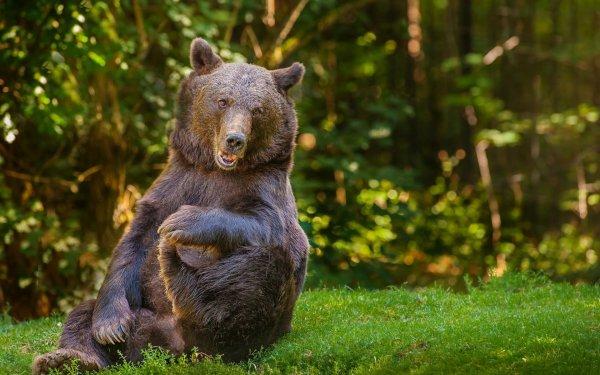 Житель Китая более года принимал медведя за собаку