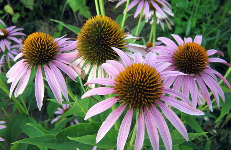 Качественные саженцы различных растений