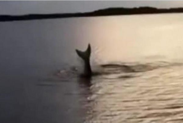 В Норвегии на камеру сняли русалку