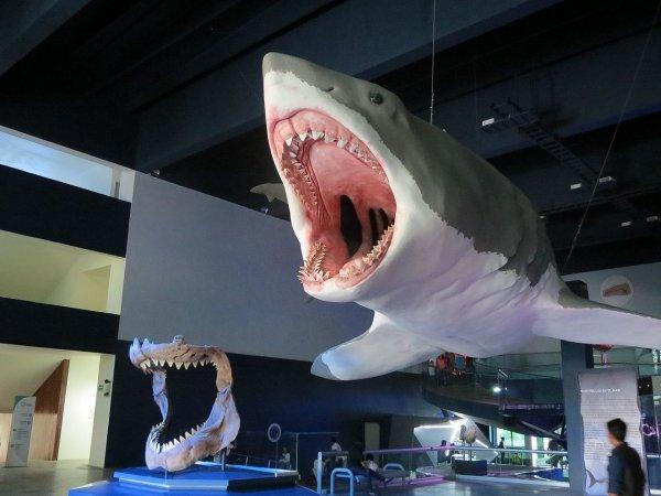 На пляже Северной Каролины найден зуб давно вымершей акулы