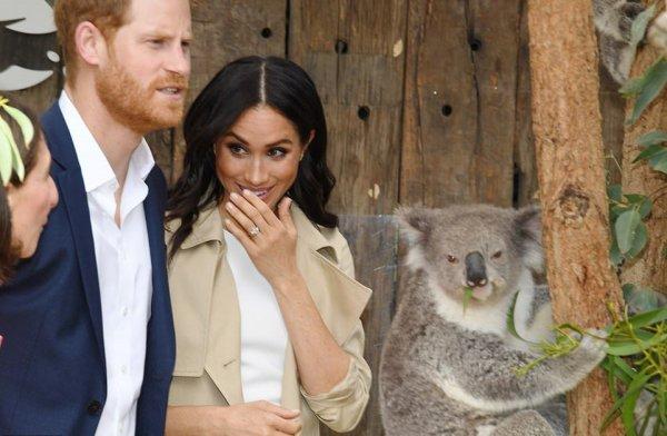 В честь Меган Маркл и принца Гарри назвали коал в зоопарке Сиднея