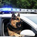 В США устроили поминальную церемонию в честь служебного пса