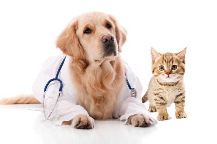 Ветеринарная клиника «На Рабочей»