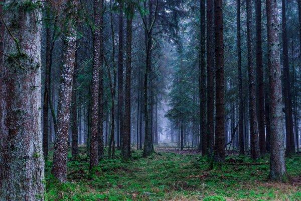 Таинственные круги из деревьев были найдены в японском лесу