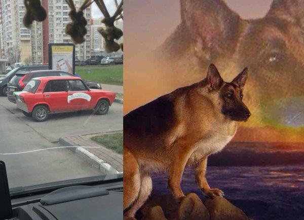 «Самая сутулая собака»: «Карликовый» тюнинг «Жигуля» высмеяли в сети