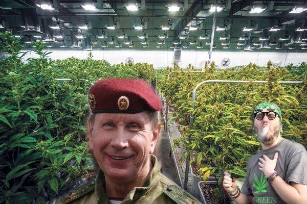 Днем генерал, ночью наркобарон: Росгвардия займется охраной плантаций мака и конопли