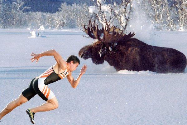 «Чтобы зимой охотится на лося – тренируйте выносливость осенью» — промысловик